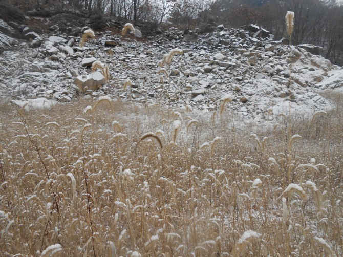 눈이 살포시 내려앉은 강아지풀 - 고기은 제공